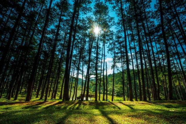 Những người ở Đà Lạt lâu năm có thể dễ dàng nhận ra mùa thu qua tiếng rừng thông reo.