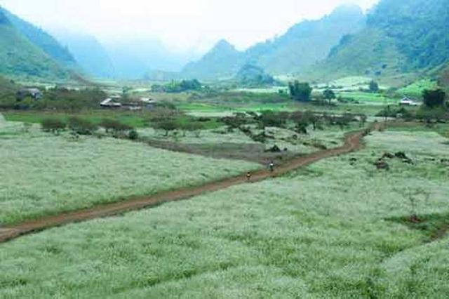 Mộc Châu không còn là điểm đến xa lạ đối với du khách Việt.