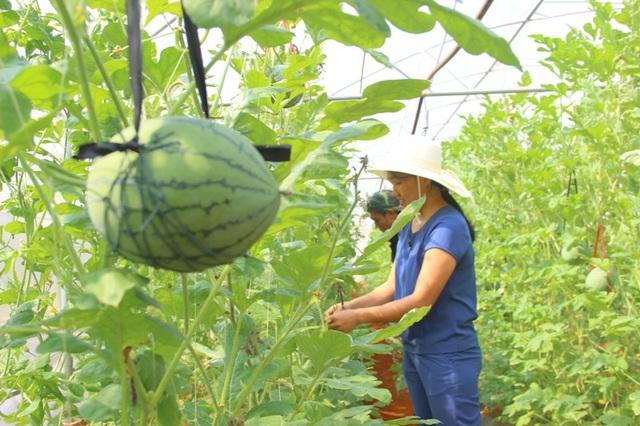 Thanh niên trẻ đã tiên phong phát triển mô hình nông nghiệp, mở ra hướng phát triển mới cho bà con nông dân
