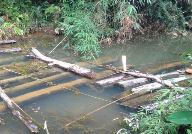Gỗ đã khai thác ngâm dưới nước