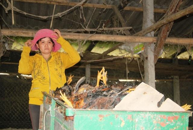 Bà Tâm chua xót nhìn đàn gà 2.500 con bị chết gần hết, thiệt hại ước tính trên 200 triệu đồng