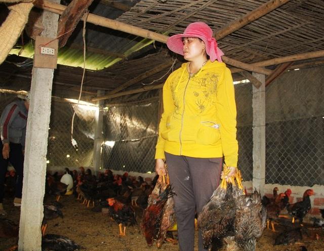 Bà Tâm (vợ ông Bình) tiếc đứt ruột nhìn đàn gà chết hàng loạt