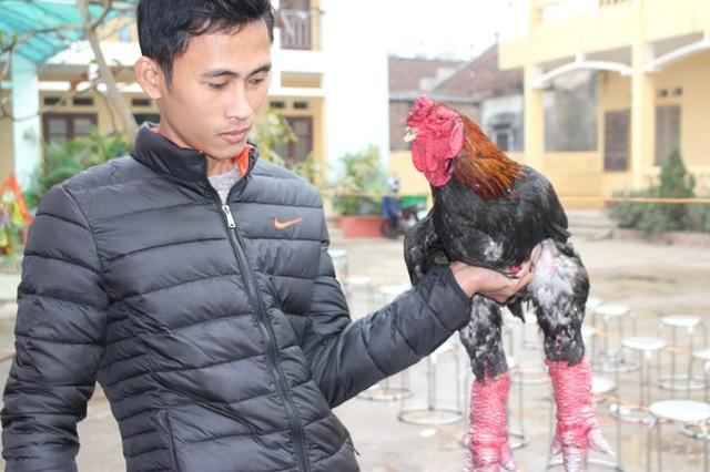 Giải nhất ở phần thi gà trống đơn thuộc về anh Nguyễn Văn Cường với chú gà nặng đến 5.3 kg