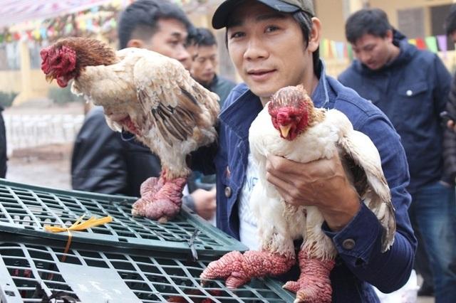 Anh Lương Công Thanh (xã Đông Tảo) đã dự thi 3 năm liên tiếp. Anh chia sẻ, để có gà đẹp, người nuôi cần có chế độ chăm sóc cầu kỳ, cẩn thận ngay từ khi gà còn bé. Sau ít nhất 8 tháng mới có thể bắt đầu tuyển lựa, chọn ra chú gà đẹp, đủ tiêu chuẩn nhất đem đến dự thi.