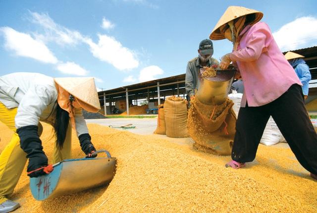 Việt Nam vẫn mãi tư duy an ninh lương thực trong khi Trung Quốc đã xem nhẹ dù là quốc gia đông dân (ảnh minh hoạ)