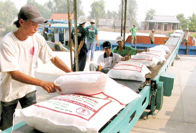 Xuất khẩu gạo Việt Nam đang gặp khó vì các thủ tục giấy phép con