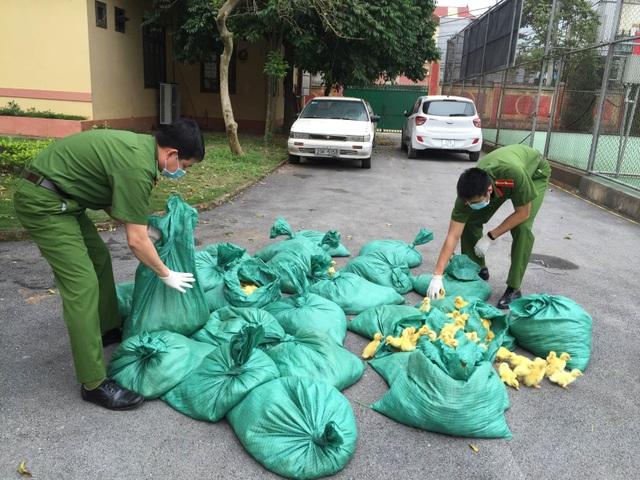 Liên tiếp bắt giữ hơn 14.000 con gia cầm giống nhập lậu Trung Quốc - 1