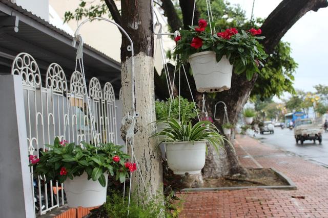 Mỗi một cây trên đường sẽ được treo từ 3 – 6 giỏ hoa xinh đẹp