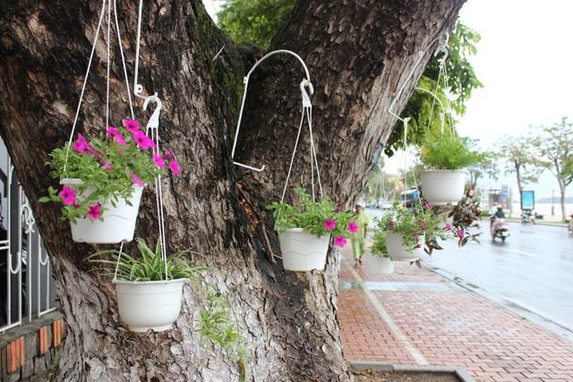 Dân Đà Nẵng treo giỏ hoa trên các tuyến đường đón APEC - 3