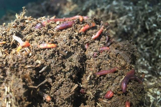 Đời sống tình dục phức tạp của một số loài sâu bọ - 2