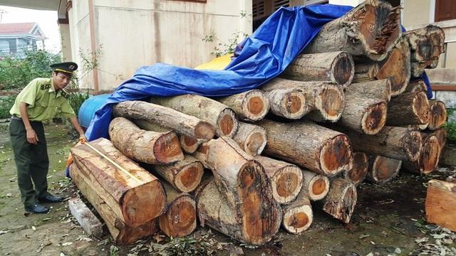 Số gỗ hương bị cơ quan chức năng thu giữ