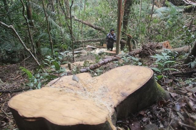 Một gốc cây vừa mới bị cưa không lâu