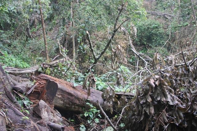 Những gốc cây trơ trọi chúng tôi bắt gặp giữa rừng