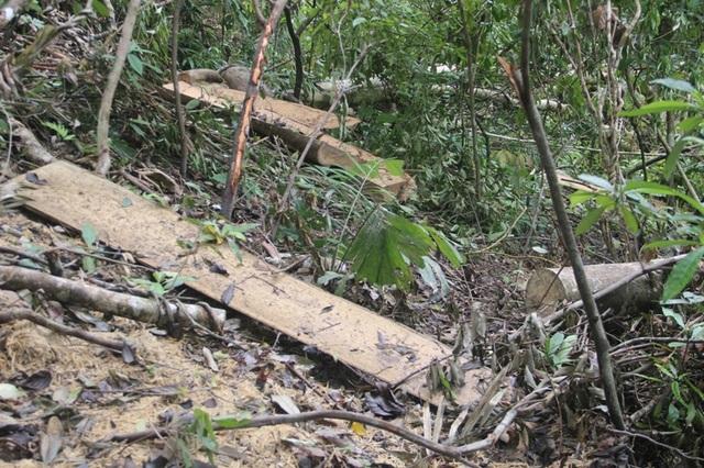 Ngổn ngang bìa gỗ trong rừng