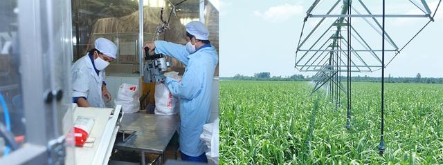Đầu tư dây chuyền sản xuất hiện đại, chú trọng phát triển vùng nguyên liệu là một trong những giải pháp cho việc tái cơ cấu ngành đường