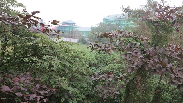 Đất của ông Hồng đã được tỉnh Nghệ An bàn giao cho dự án BMC dù khi sự việc đã bị TAND TP Vinh huỷ bỏ.