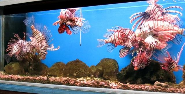 Thế giới sinh vật biển kỳ thú ở Viện Hải dương học