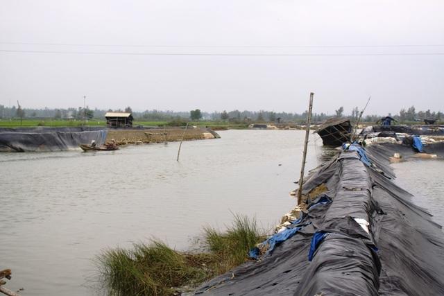 Hồ nuôi tôm trở thành những con đê ngăn dòng chảy sông Kinh
