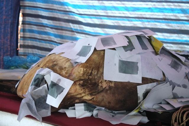 Con cá lạ nặng gần 400kg được ngư dân cho là cá Bà Bằng, loài cá thường giúp đỡ người gặp nạn trên biển.