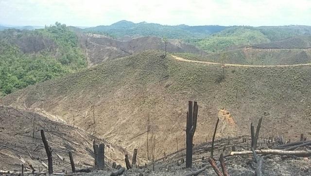 """Hiện trường vụ phá rừng cũ để trồng rừng mới khiến nhiều quả đồi bị """"cạo trọc"""""""