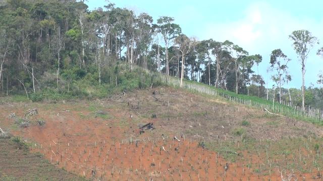 Hiện trường một vụ phá rừng tại Quảng Sơn nghi do có đối tượng bảo kê
