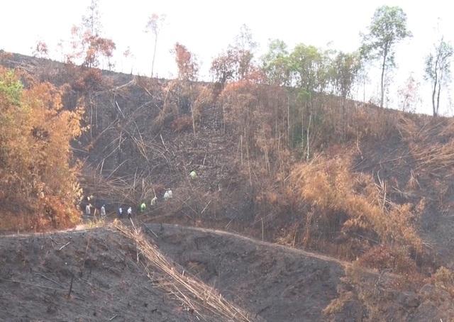 Hiện trường vụ phá rừng thuộc địa phận xã Quảng Sơn mới bị phát hiện