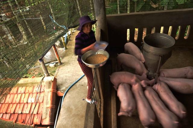 """Quảng Ngãi: Dân """"bạo tay"""" chi trăm triệu đồng xây nhà lầu nuôi gia súc - 1"""