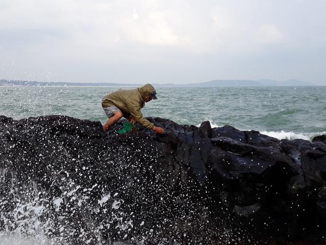 Vào đầu tháng 11 Âm lịch, người dân ven biển Quảng Ngãi lại đội sóng hái rau mứt trên đá nham thạch