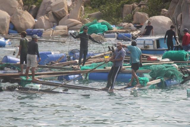 Hàng loạt lồng bè nuôi tôm hùm, cá bớp, cá mú... trên Vịnh Vân Phong, Khánh Hòa tan hoang sau bão số 12 hồi tháng 11 năm nay