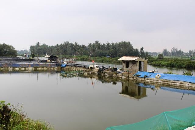 Nhiều đoạn sông chiều rộng chỉ còn chưa đầy 10 m do bị hồ nuôi tôm lấn chiếm, chặn dòng