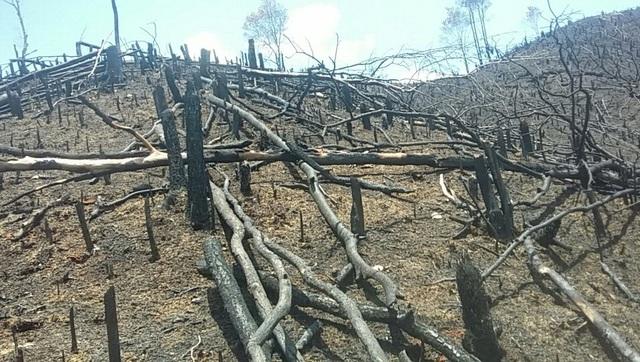 Nhiều gốc cây bị đốt trụi, nham nhở