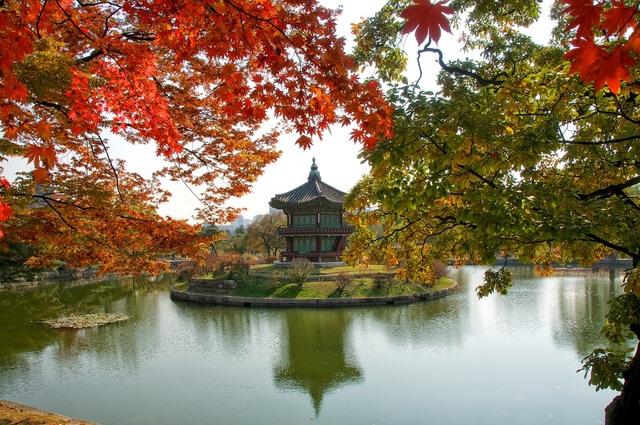 Mùa thu rực rỡ ở Hàn Quốc.