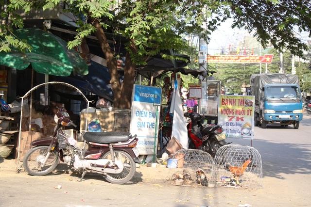 Người dân tận dụng vỉa hè đường Nguyễn Tự Tân để... nuôi gà.