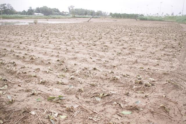 Hai đợt lũ liên tiếp khiến các vùng chuyên canh cây rau ăn lá tại Quảng Ngãi thiệt hại nặng nề đẩy giá rau tăng cao