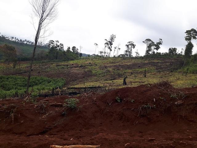 Các nhân chứng cũng khẳng định rừng đã bị hủy hoại từ trước tháng 1/2015