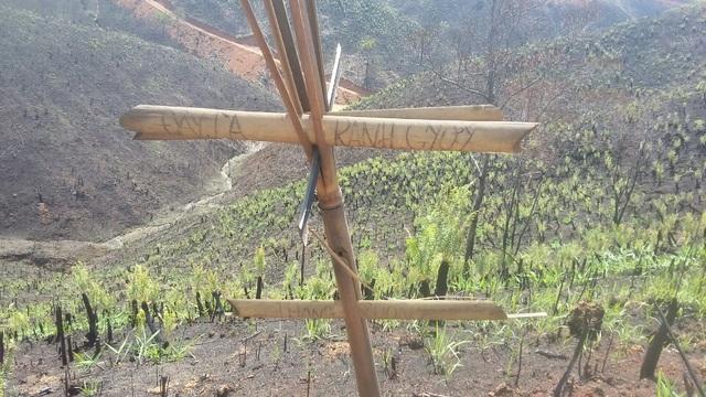 Ngoài việc tự ý phá rừng, công ty lâm nghiệp còn phá lấn sang lâm phần của đơn vị khác