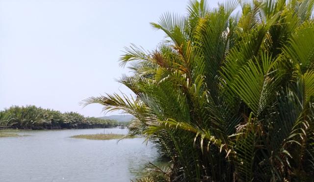 Rừng dừa nước xã Bình Phước rộng 70 ha, trong đó 50 ha sẽ bị phá làm hồ chứa nước phục vụ nhà máy giấy VNT 19.