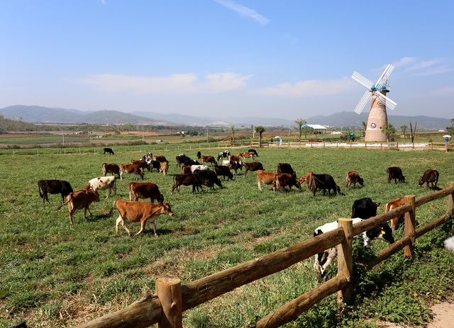 Hệ thống nhà máy, trang trại của Vinamilk luôn đảm bảo đưa từng giọt sữa tươi ngon tới tay người tiêu dùng.