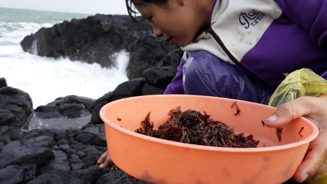 Nghề hái rau mứt tiềm ẩn nhiều nguy hiểm vì đá trơn trượt, sóng lớn khiến người hái rau có thể rơi xuống biển bất cứ lúc nào
