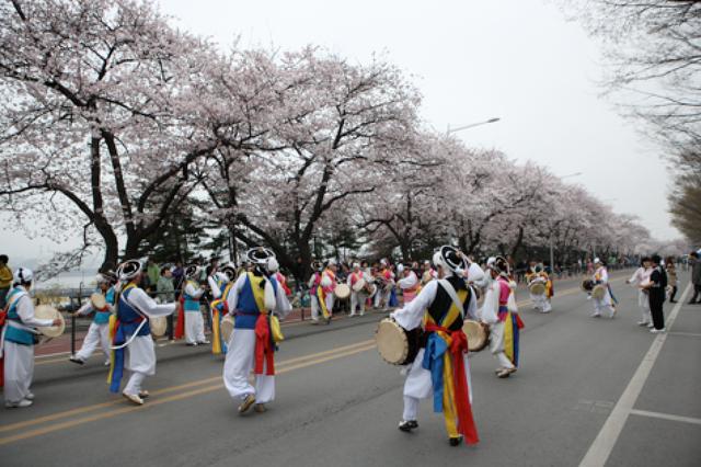 Hoa anh đào - Lời mời gọi của mùa Xuân Hàn Quốc - 3