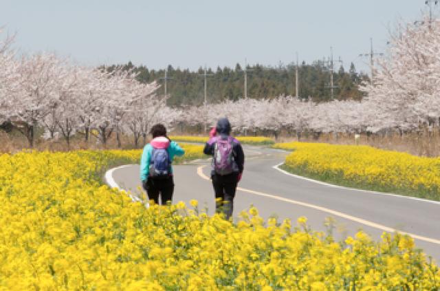 Hoa anh đào - Lời mời gọi của mùa Xuân Hàn Quốc - 7