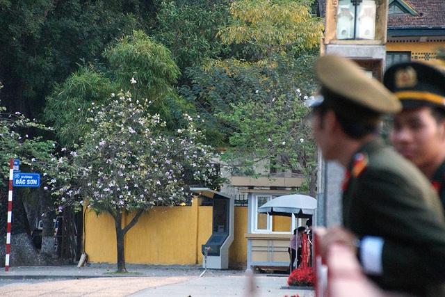 Một vài năm trước, khi nhắc đến hoa ban ở Hà Nội, người ta nghĩ ngay đến những hàng cây hoa ban ở đường Vườn Hồng - Bắc Sơn, ngay khu vực Ba Đình.