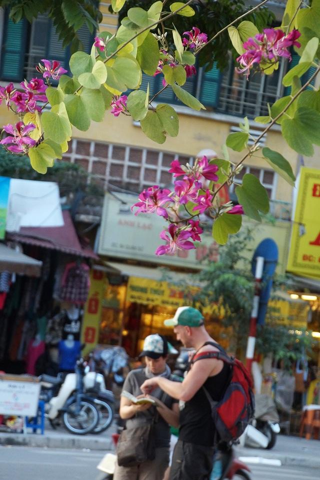 Hoa nở rộ ở góc phố Trần Hưng Đạo - Quán Sứ (Hà Nội).