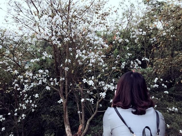 Trắng trời hoa ban đường lên Tượng đài Chiến thắng Điện Biên Phủ.