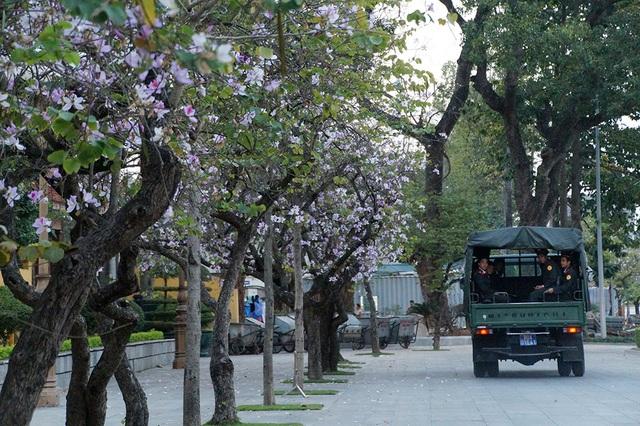 Năm nào cũng vậy, hoa ban nở rộ vào mỗi dịp đầu xuân. Cứ đến mùa hoa ban nở là đường Bắc Sơn (Hà Nội) lại rực rỡ màu hoa trắng tím.