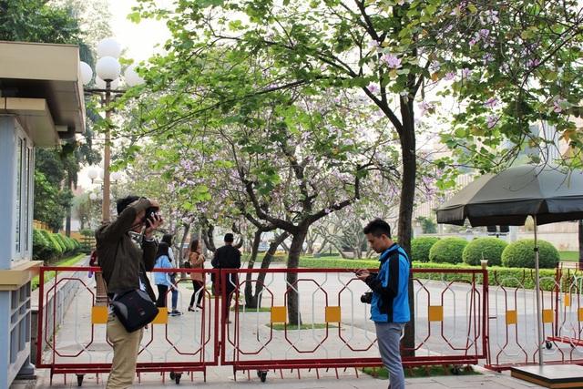 Mùa hoa ban nở thu hút nhiều bạn trẻ đến chụp ảnh.