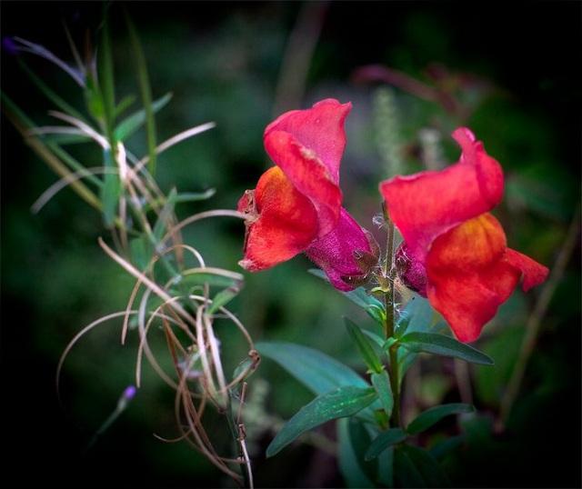 Ngắm vẻ đẹp lạ kỳ của những bông hoa mang hình đầu lâu - 5