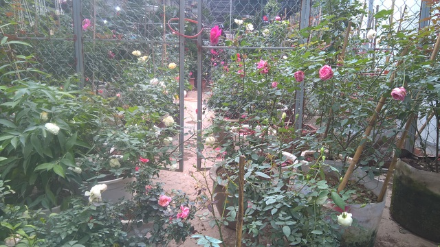 Cả vườn hoa có rất nhiều loại hoa nhập khẩu khác nhau được trưng bày khắp không gian của hàng
