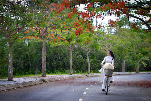 Thiếu nữ mặc áo dài trắng đạp xe trên con đường ngợp hoa phượng đỏ.