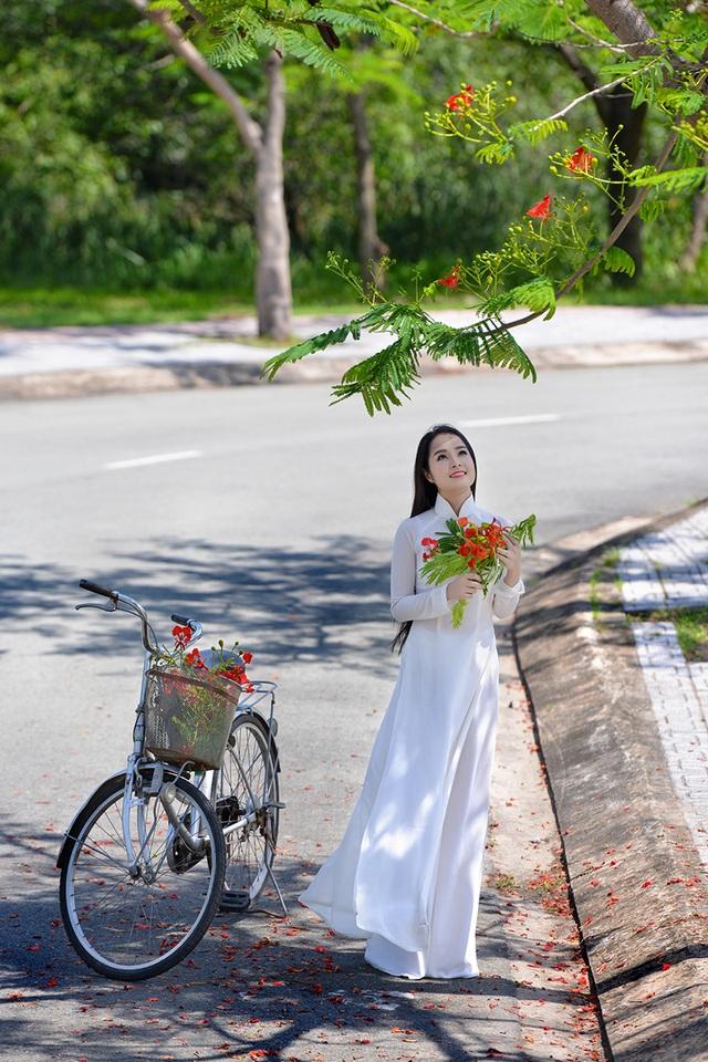 Mùa hoa phượng vĩ ở thành phố mang tên Bác - 7